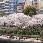 隅田公園でお花見ができる期間とは?見どころや穴場スポットなど