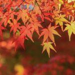 2016年の嵐山もみじ祭りの開催日やアクセス、穴場スポットを知ろう!