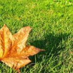 立秋の意味は何?今年はいつで向いてる食べ物とは何だろう?