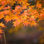 2016年善峯寺の紅葉!雄大な山に囲まれたコントラストが美しい