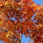 気温の差が生み出す八甲田山の2016年紅葉、見ごろ時期は?