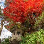 厳島神社も有名な宮島も紅葉を楽しめるエリア!