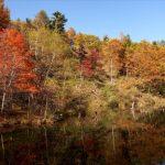 高原が黄金色に染まる2016年の八千穂高原の紅葉の見頃時期は?
