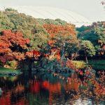 小石川後楽園の紅葉は日中に観ることがカギ!2016年見ごろ時期は?
