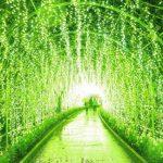 あしかがフラワーパーク 光の花の庭の見どころや混雑状況は?