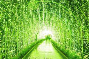 あしかがフラワーパーク 光の花の庭