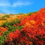 アルペンルートなどのある立山の紅葉!アクセス方と2016年見頃は?