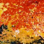 足湯も楽しめる秋川渓谷の紅葉2016年の見ごろ時期とアクセス方法