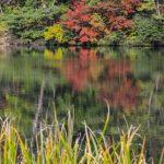 錦の紅葉絵巻、大山の紅葉2016の見ごろ時期とアクセス方法は?