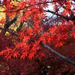 埼玉の平林寺も綺麗な紅葉を楽しむことができる!